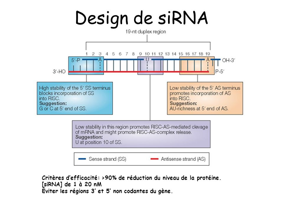 Design de siRNA Critères d'efficacité: >90% de réduction du niveau de la protéine. [siRNA] de 1 à 20 nM.